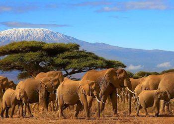Tanzania: safari, cultura ed etnie - 1/10 agosto 2018